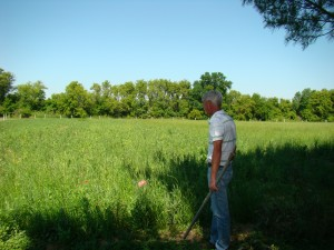 Prairie restoration with tree tubes