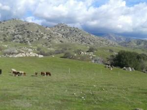 Tree Tubes and Livestock