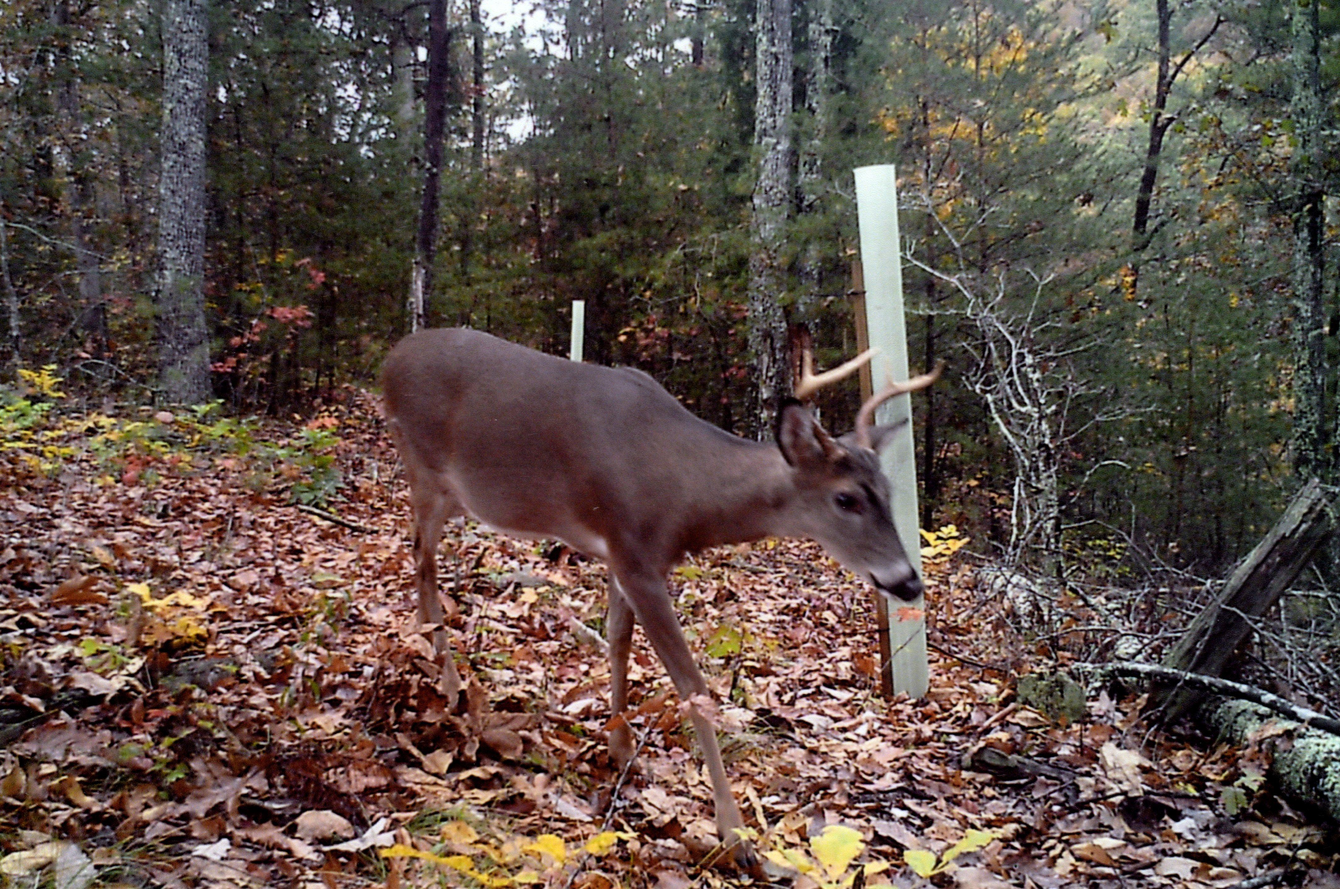 Tree S Protect Seedlings From Deer